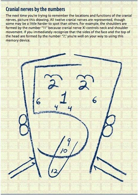 nerwy czaszkowe